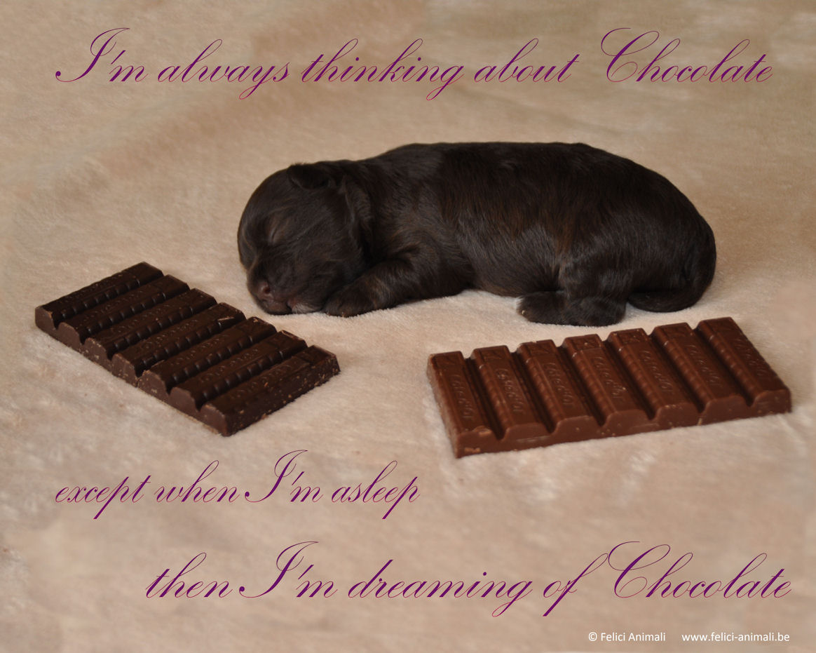 I'm always thinking about chocolate ... except when I'm asleep ... then I'm dreaming of chocolate